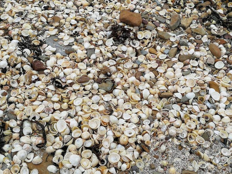 Spiaggia conchiglie a Mey