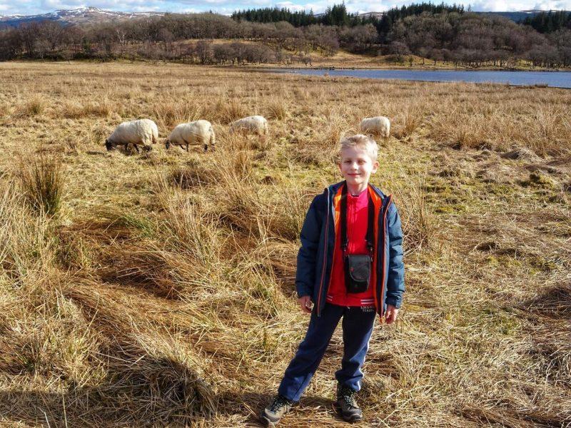 Kilchurn Castle Sheep