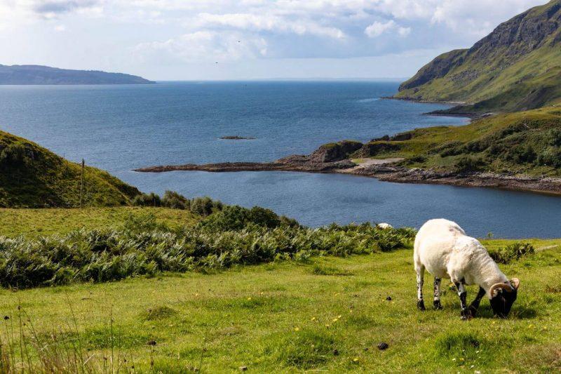 Ardamurchan Peninsula Scozia