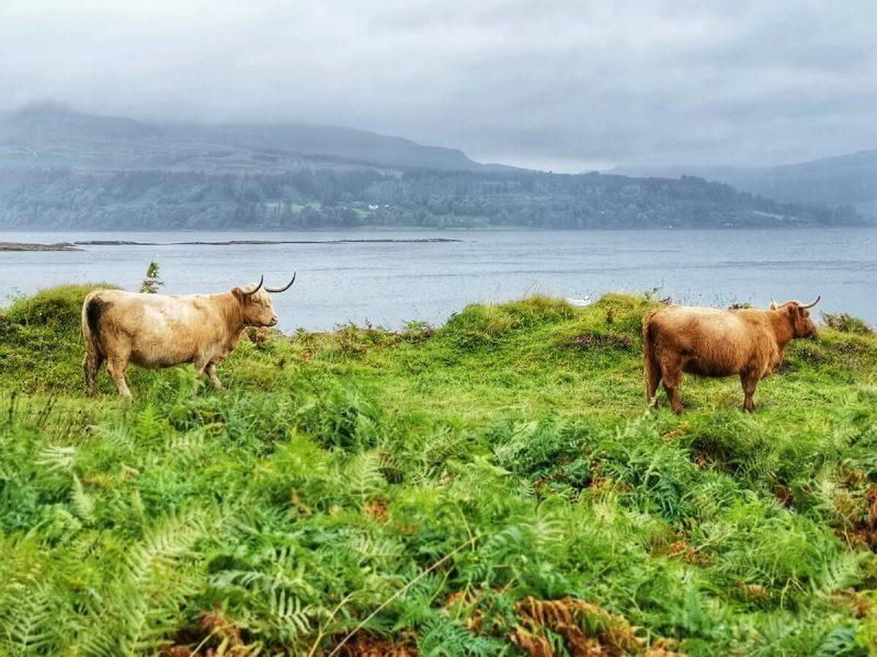 Isola di Mull