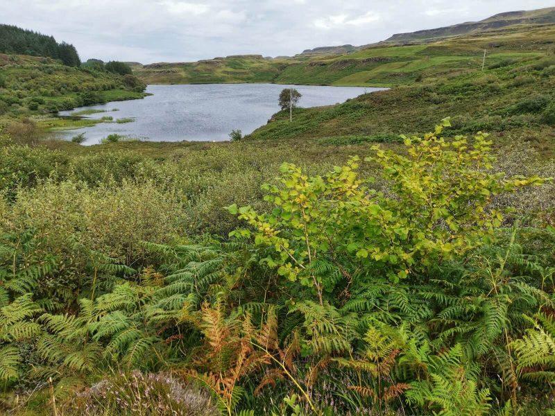 Loch Tor