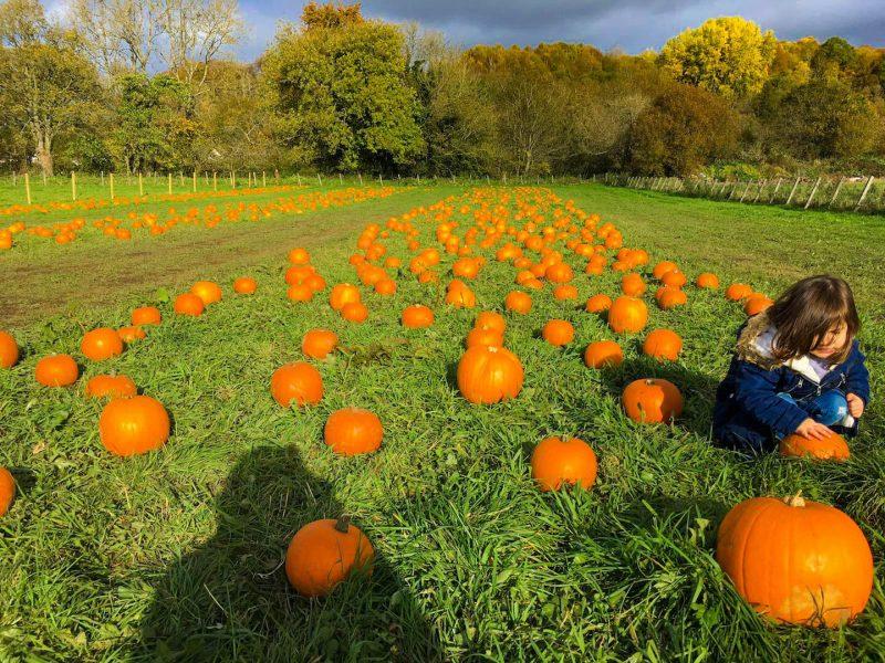 Halloween scozia fattoria