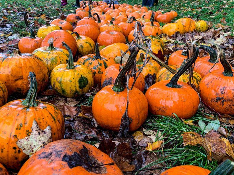 Halloween Scozia viaggio zucche